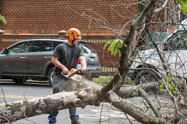 Parks Local 1506 Climber and Pruner Cody Sharp and three coworkers in Brooklyn Forestry are now civil servants with the union's help. Photo: Clarence Elie-Rivera